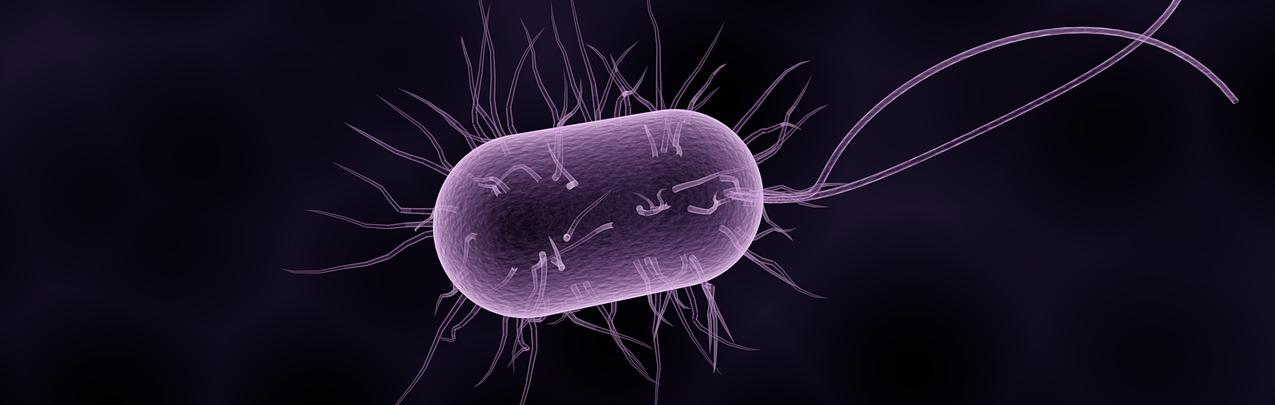 Antibiotica en diarree